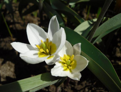 27 неприхотливых цветов для …