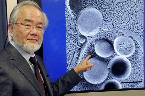 Нобелевский лауреат-2016 док…