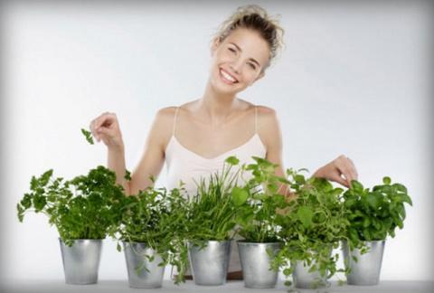 Зелень, которую можно выращивать на подоконнике