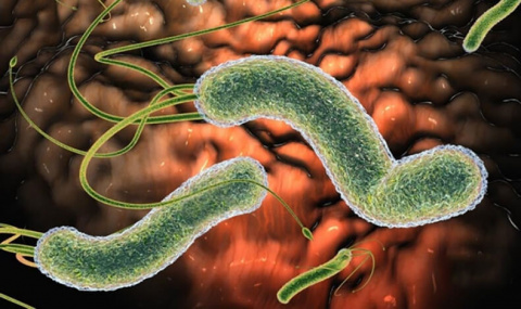 Этот простой рецепт поможет очистить организм от паразитов
