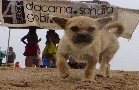 После марафона спортсмен подобрал бездомную собаку...