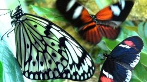 Великолепие бабочек