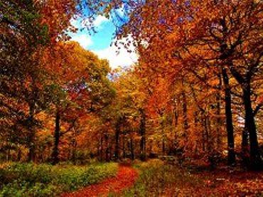 НАСТРОЙ ДНЯ. Осеннее настроение