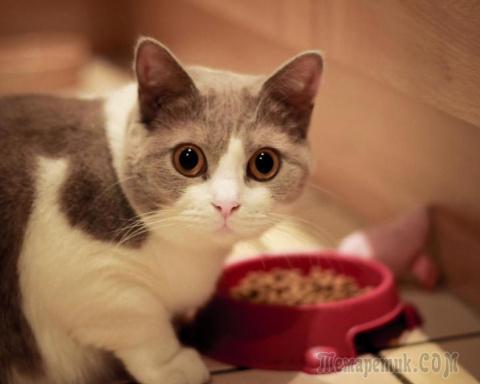 Как сделать жизнь, украшенную присутствием в ней кота, более удобной и приятной?