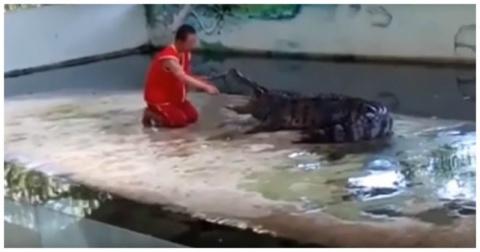 Крокодил укусил дрессировщика за голову на глазах у туристов