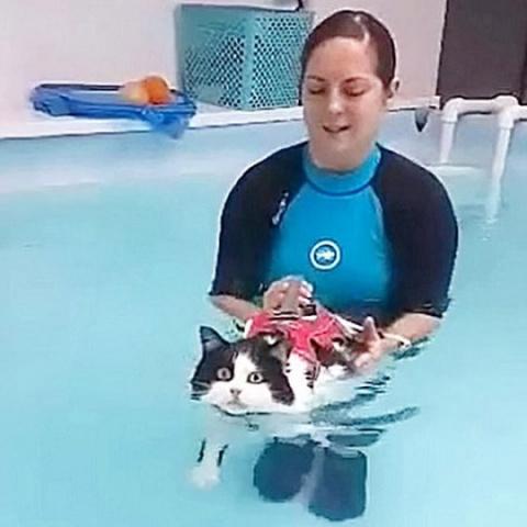 Кошка занялась плаванием, чт…