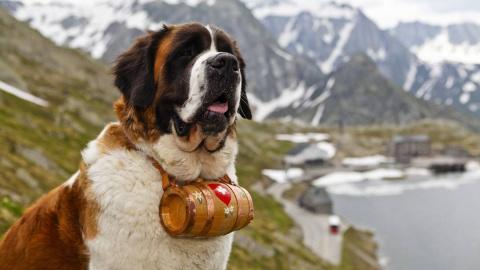 Интересные факты о собаках-с…