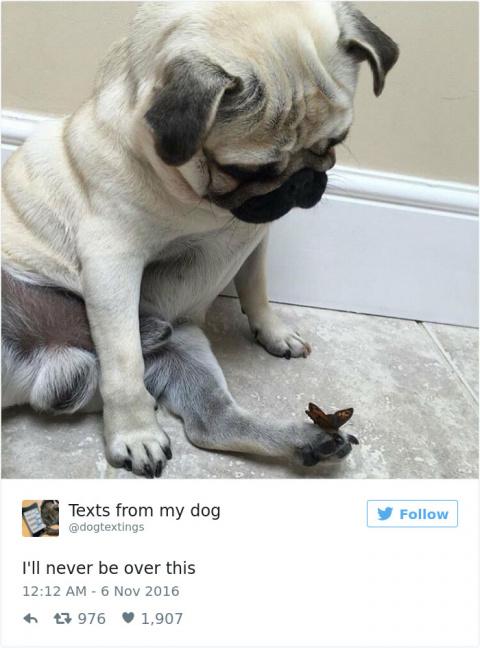 Самые милые твиты о собаках, которые доведут вас до слёз от смеха!
