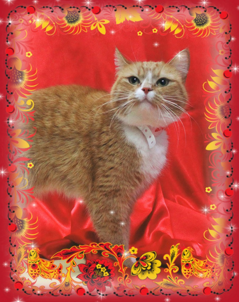 Санкт-Петербург!!! Приглашаем на выставку-пристройство котов и кошек «МАСЛЕНИЦА И ПРОВОДЫ ЗИМЫ»!!!