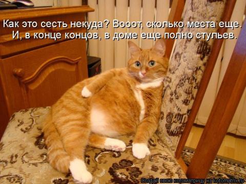 приколы с надписями про котов фото