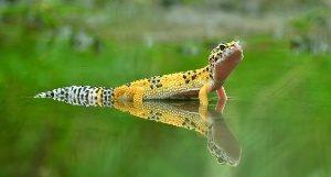 Рептилии, обладающие способн…
