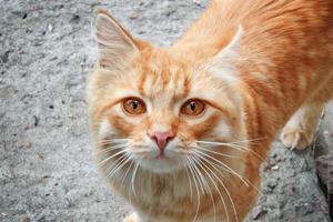 Возвращение блудного кота Рыжика