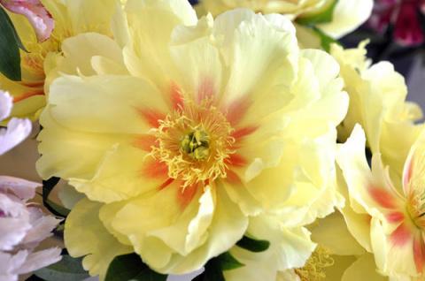 Цветение и краткая агротехни…