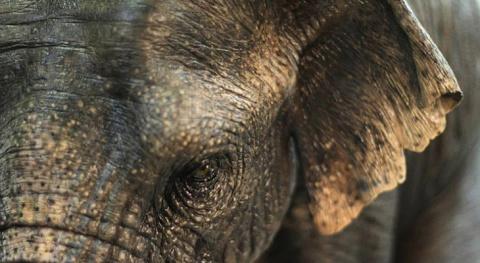 Про слонов, которых не всегд…