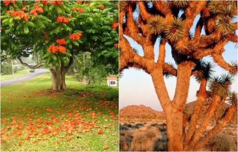 Самые необычные деревья: природа умеет удивлять