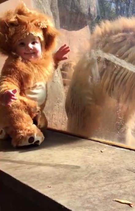 Малыш в костюме льва встреча…