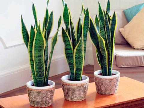 Комнатные растения: красота и польза