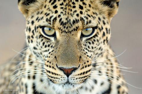 Конкурс дикой природы Wildlife Photographer of the Year