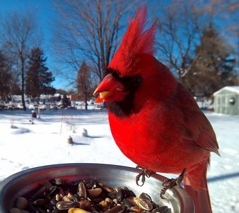 Парень поставил кормушку за окном и весь год фотографировал птиц, которые прилетали покушать