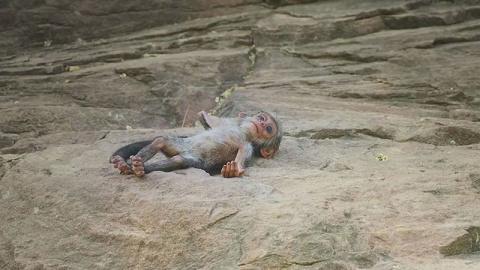История о том, как обезьяны …