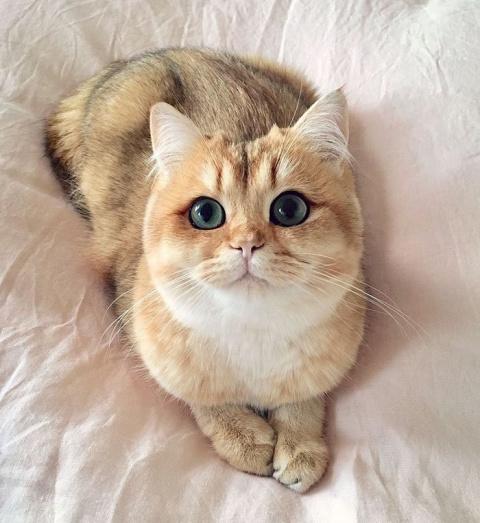 Красавчики коты