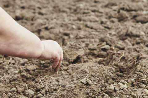 Гуминовые кислоты помогут восстановить почву на участке