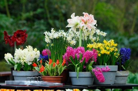 Как вырастить дома садовые цветы
