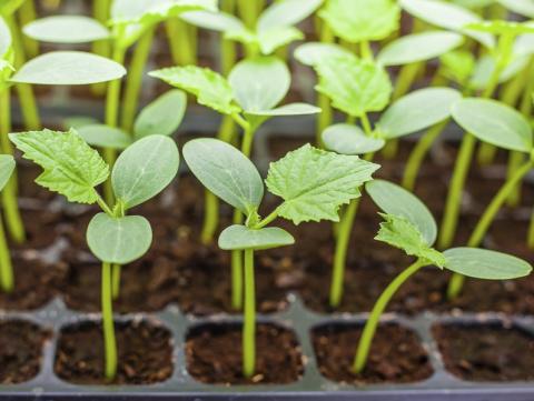 Как сэкономить на рассаде - советы для рачительных садоводов