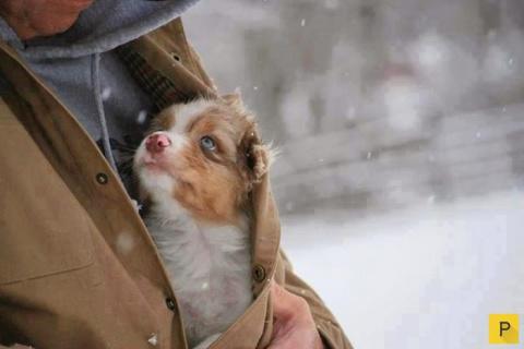 Умилительные фото собак и их хозяев