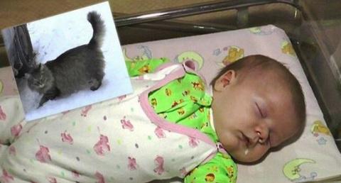 Кошка заметила и спасла ребе…
