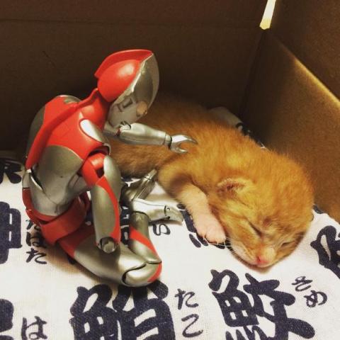 Крошечный бездомный котенок
