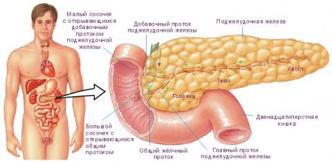 ЗДРАВОТДЕЛ. Народные средства для лечения поджелудочной железы