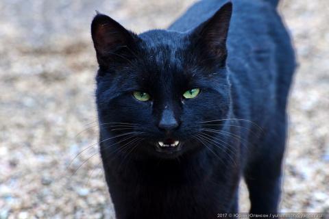 Сегодня - День кошек! С праздником!