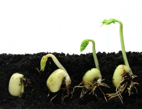 Общие рекомендации для посева семян под зиму