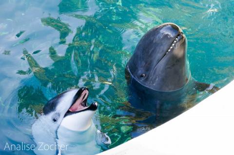 """Спасите Хелен!"" Дельфин, по…"