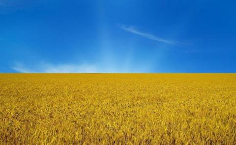 Политика Украины привела к драке за урожай