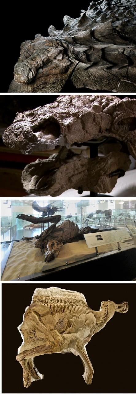 Мумии динозавров
