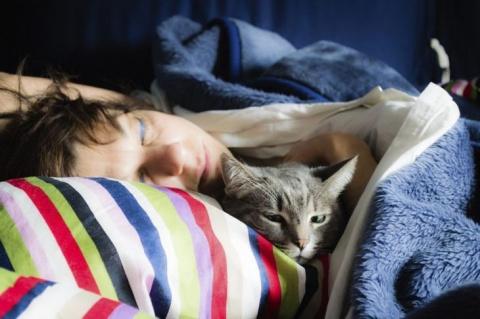 Если кошка любит спать в ваш…