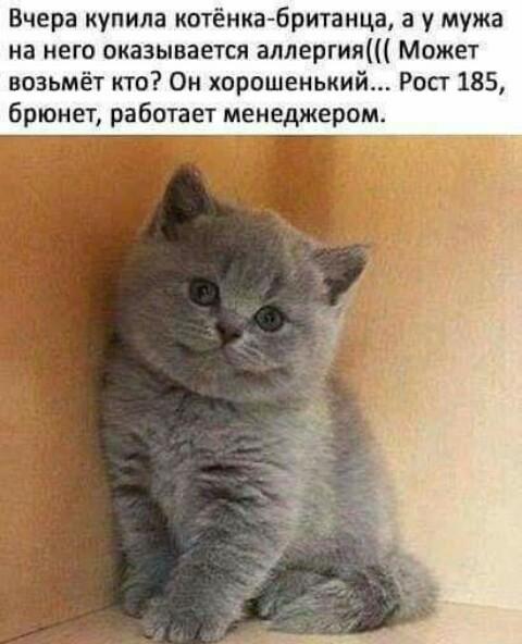 Отдам в хорошие руки!))