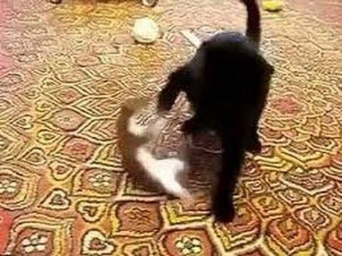 Такую мышку даже коту поймать не под силу!