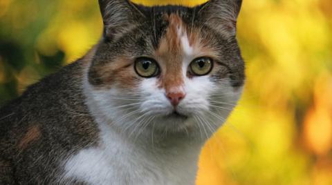 Как помочь кошке в период по…