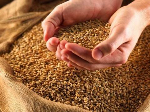 Что такое инкрустация семян, технология проведения