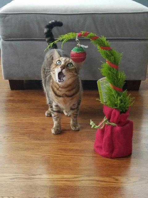 20 бесподобных котов, вступи…