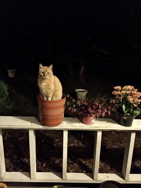 14 кото-растений, которые ра…