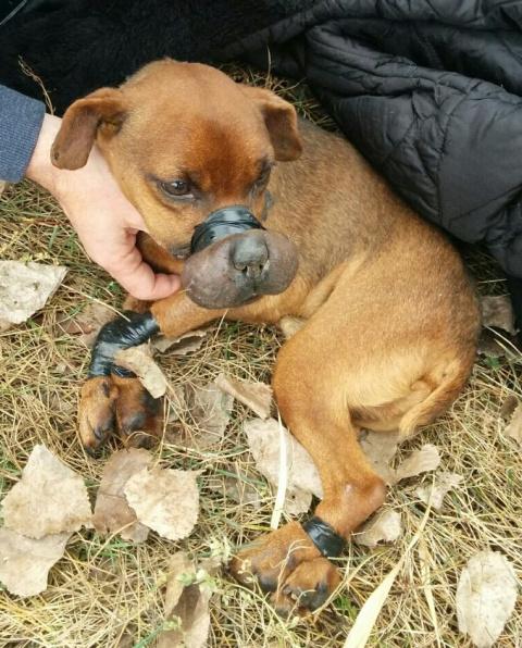 Спасенный пес с перемотанными скотчем лапами и мордой получил именную партию игрушек