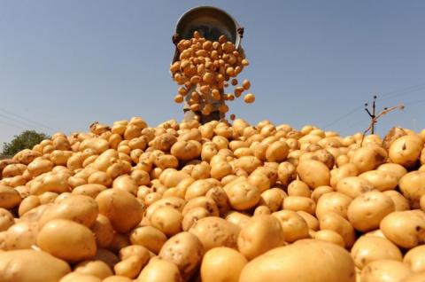 Советы по выращиванию картоф…