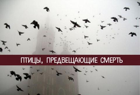 Птицы, предвещающие смерть