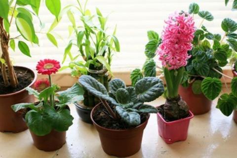 Какие комнатные растения нуж…