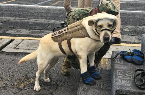 Собака Фрида спасла жизни 52…