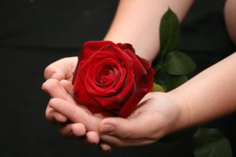 """История: """"Самая дорогая роза"""""""